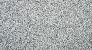 Givré - Ijsbloemen